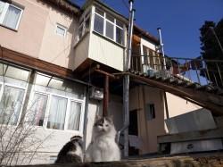 Продажа: квартира в Ялте с участком, частный сектор. ЮБК - Крым