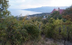 Продажа: 8,5 соток с видом на море, Ялту и Аю-Даг. ЮБК - Крым