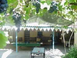 Vineyards | Недвижимость Крым, ЮБК, Ялта