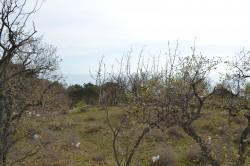 ea_DSC_0117 | Недвижимость Крым, ЮБК, Ялта
