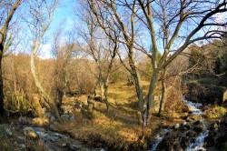 ea_DSC_1595_JPG | Недвижимость Крым, ЮБК, Ялта