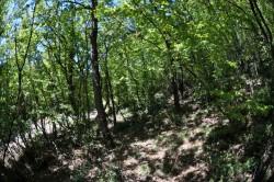 ea_DSC_5789_JPG | Недвижимость Крым, ЮБК, Ялта