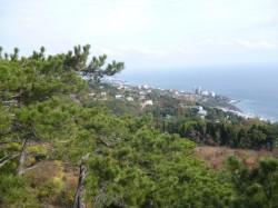 Продажа: 5 гектар в Алупке, панорамный вид на море, Ялта, ЮБК. ЮБК - Крым