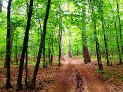 Участок в лесу, над Ялтой | Недвижимость Крым, ЮБК, Ялта
