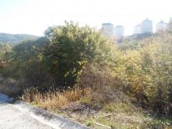 ea_mirniy_8_sotok_2_5_km_more_5 | Недвижимость Крым, ЮБК, Ялта